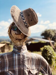 scarecrow-garden-in-a-straw-hat-F5Z8M9M